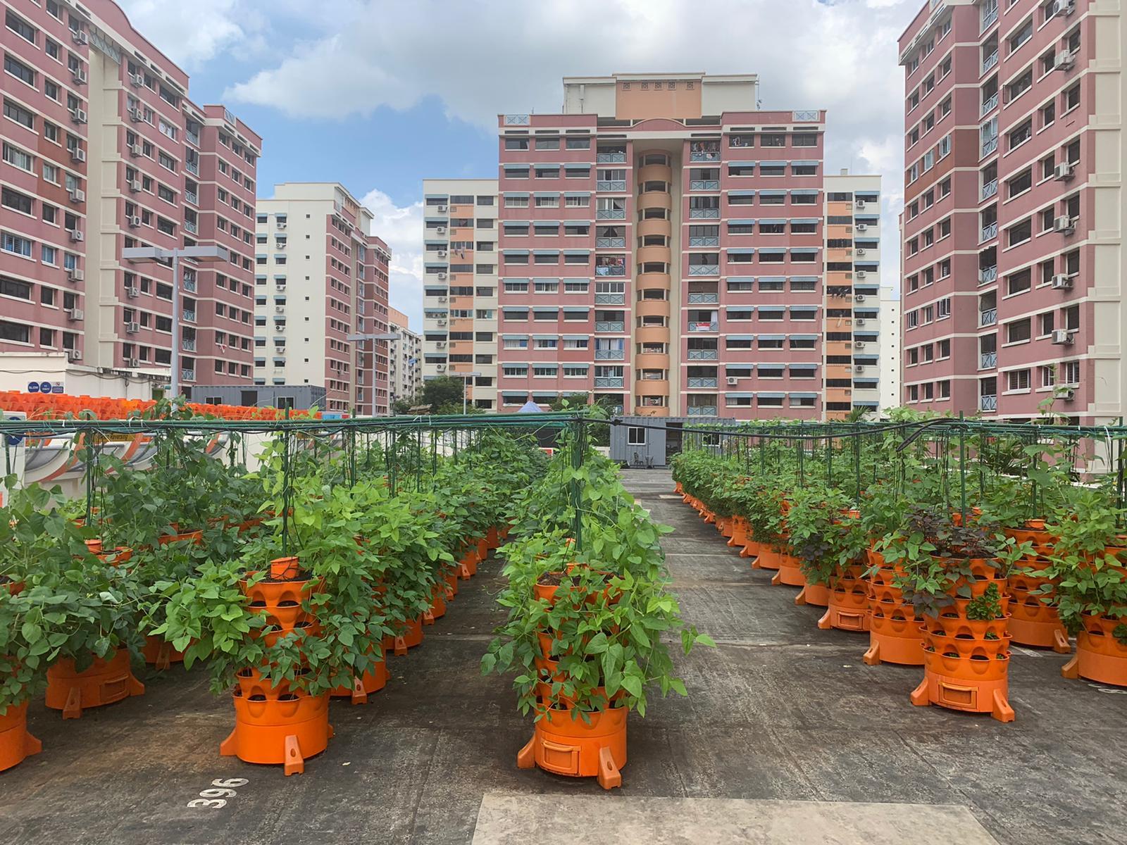 Smart Farm Collaboration (Soil based)